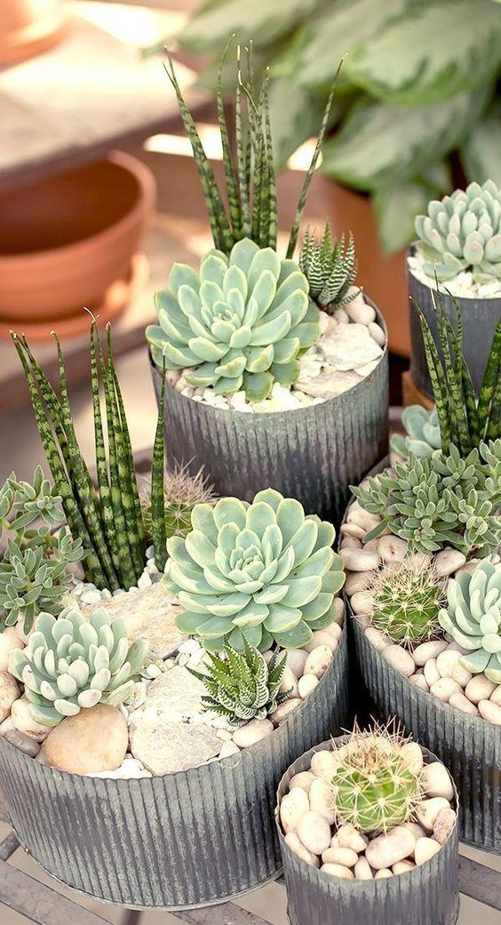 natura piante succulente